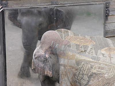elephant_jazz