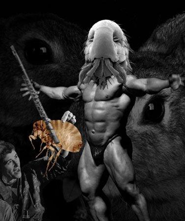 fleas_on_steroids